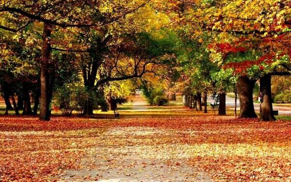 Tả về mùa thu trên quê hương em